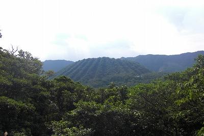2008-11-2 001.jpg