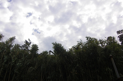 2008-11-28 030.jpg