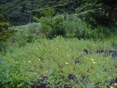 2009-6-24 005.jpg