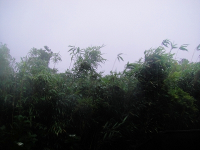 2009-8-11 096.jpg