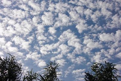 2008-10-31 015.jpg