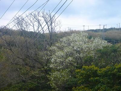 2008-3-29 008.jpg